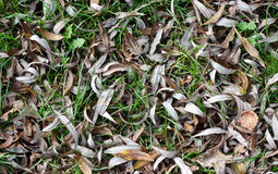 Gevallen bladeren Stock Fotografie