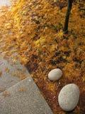 Gevallen Bladeren Royalty-vrije Stock Foto's