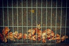 Gevallen Bladeren achter de Achtergrond van de Draadrooster Stock Afbeeldingen