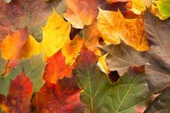 Gevallen bladeren in Autum Royalty-vrije Stock Afbeeldingen