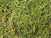 Gevallen bladeren Bederf geoogst gras in grote groene geurhoop in hoek van tuin Royalty-vrije Stock Afbeelding