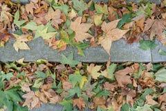 Gevallen Bladeren, de Herberg van Lincoln, Stad van Londen, het UK royalty-vrije stock afbeelding