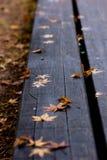 Gevallen bladeren in de herfst Stock Afbeeldingen