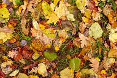 Gevallen bladeren De herfst Royalty-vrije Stock Foto's
