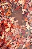 Gevallen bladeren De herfst Stock Foto