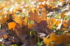 Gevallen bladeren, de herfst Royalty-vrije Stock Foto