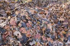 Gevallen bladeren, de herfst Stock Afbeelding