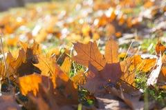 Gevallen bladeren, de herfst Royalty-vrije Stock Afbeeldingen