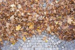Gevallen bladeren, de herfst Royalty-vrije Stock Afbeelding
