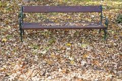 Gevallen bladeren, de herfst Stock Foto's