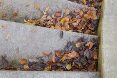 Gevallen bladeren, de herfst Stock Foto