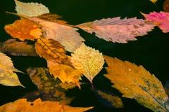 Gevallen bladeren die in vijverwater liggen royalty-vrije stock foto's