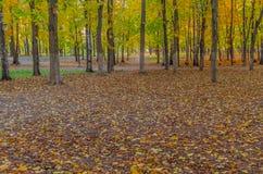 Gevallen bladeren en vergeelde bomen met vogelhuizen in het Park stock afbeelding
