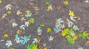 Gevallen bladeren met typische de herfstkleuren royalty-vrije stock afbeelding