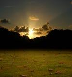 Gevallen Bladeren na Onweer in Dawn Stock Afbeeldingen