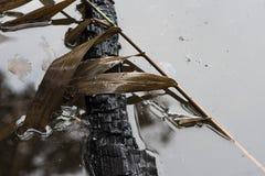 Gevallen bladeren op boeg in water stock fotografie