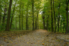 Gevallen bladeren op de parksteeg Stock Foto's