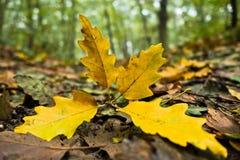 Gevallen bladeren op een bosweg bij de herfst Stock Fotografie
