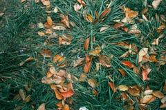Gevallen bladeren op groen gras royalty-vrije stock fotografie