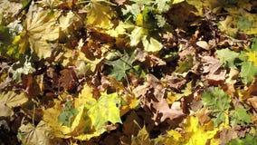 Gevallen bladeren op grond stock footage