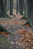 Gevallen bladeren op wandelingssleep in beukbos stock foto