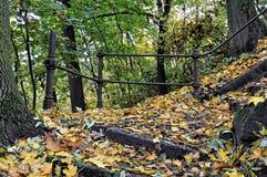 Gevallen bladeren overal de stappen Stock Afbeelding