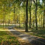 Gevallen bladeren in park Royalty-vrije Stock Fotografie