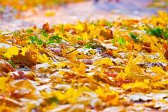 Gevallen bladeren ter plaatse Royalty-vrije Stock Afbeeldingen