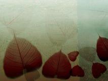 Gevallen bladeren van de fijne kunstillustratie _ Royalty-vrije Stock Foto's