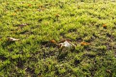 Gevallen bladeren van het sluiten in backlit Stock Foto's