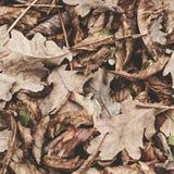 Gevallen bladeren van kastanje, esdoorn, eik, acacia Bruin, rood, oranje en gren Autumn Leaves Background Zachte kleuren stock afbeelding
