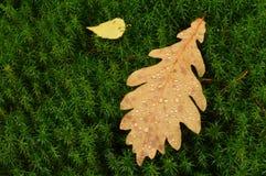 Gevallen bladeren in waterdalingen na regen op de bosdekking van mos Stock Fotografie