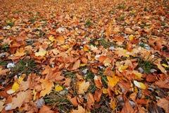 Gevallen bladerenachtergrond Stock Foto's