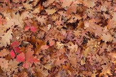 Gevallen bladerenachtergrond Stock Fotografie