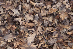 Gevallen bladerenachtergrond Stock Afbeelding