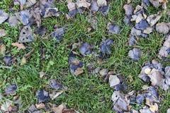 Gevallen bladerenachtergrond Stock Afbeeldingen