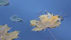 Gevallen bladerenvlotter onderaan de rivier stock video