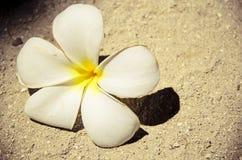 Gevallen bloem Stock Foto's