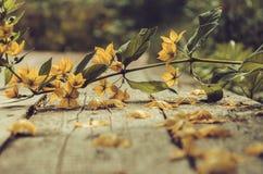 Gevallen bloem Royalty-vrije Stock Foto's