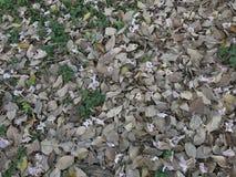 Gevallen bloem en bladeren in de tuin stock foto