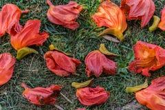 Gevallen Bloemen Royalty-vrije Stock Afbeeldingen