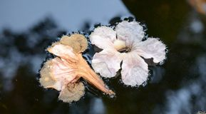 Gevallen bloemen in water stock foto