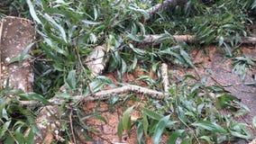 Gevallen Bomen Stock Fotografie