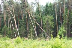 Gevallen Bomen Stock Afbeeldingen
