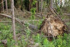 Gevallen Bomen Stock Foto