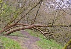 Gevallen bomen in de lente stock foto