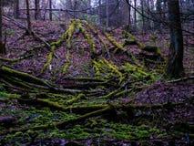 Gevallen Bomen in Forst Stock Foto