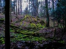 Gevallen Bomen in Forst Royalty-vrije Stock Afbeelding