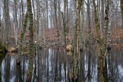 Gevallen Bomen in Moeras Stock Afbeeldingen