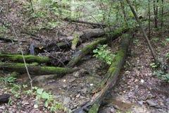 Gevallen bomen over stroom stock foto